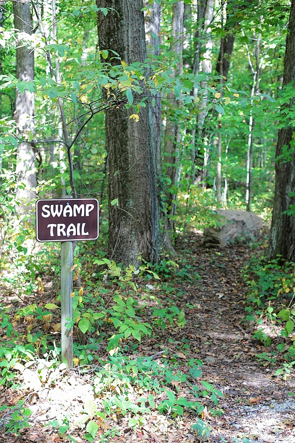 Picture of swamp trail