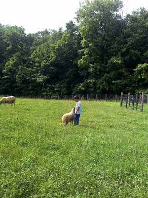 image of boy standing in pasture with sheep