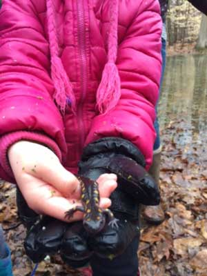 image of child holding a salamander